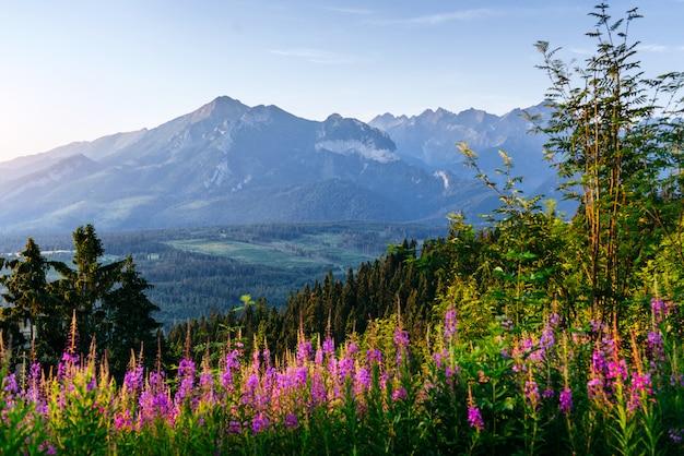 Fleurs sauvages au coucher du soleil dans les montagnes. pologne