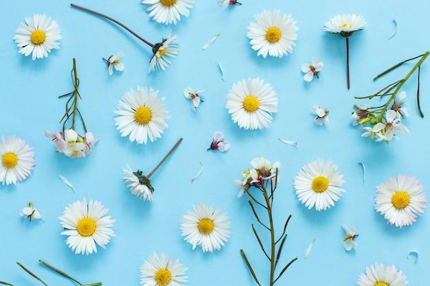 Fleurs sauvages blanches sur une vue de dessus de fond bleu clair