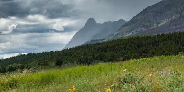 Fleurs sauvages dans un champ avec la chaîne de montagnes en arrière-plan, going-the-sun road, nation glaciaire
