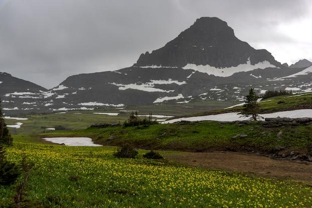 Fleurs sauvages, dans, champ, à, montagne, dans, fond, contre, ciel nuageux, col logan, nation glacier