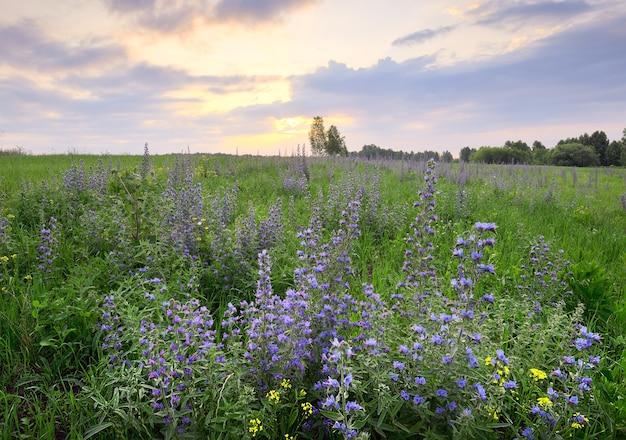 Fleurs sauvages dans l'herbe épaisse sur le terrain le matin sous un ciel nuageux