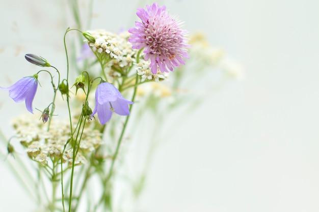 Fleurs sauvages en fleurs isolées
