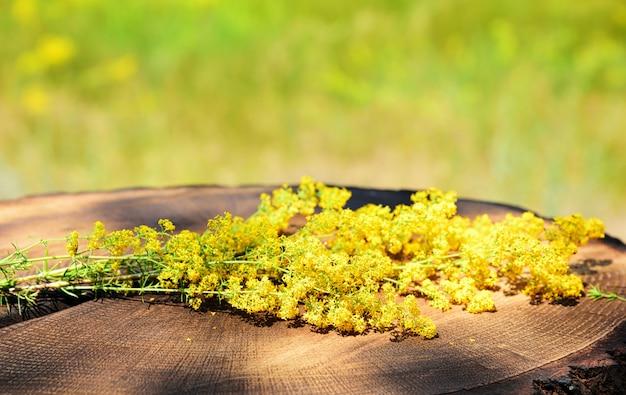 Fleurs sauvages en fleurs jaunes se trouvent sur la souche