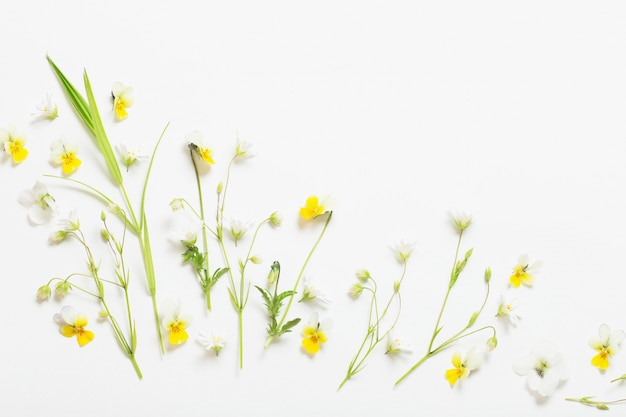 Fleurs sauvages sur fond blanc