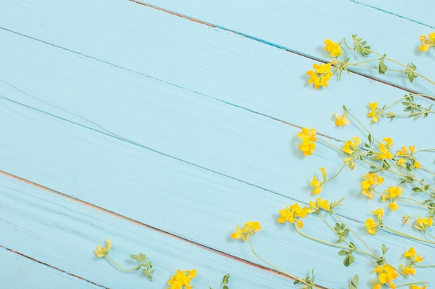 Fleurs sauvages jaunes sur une surface en bois bleue