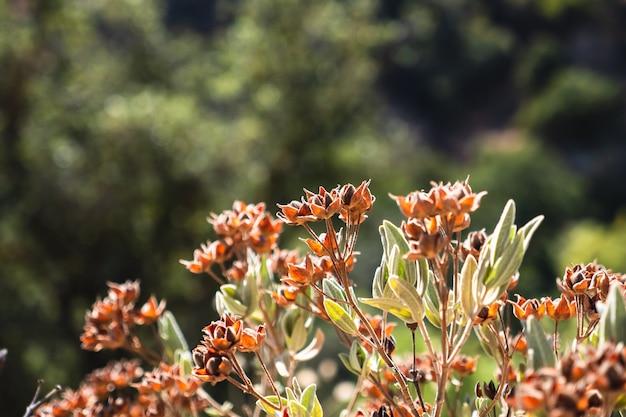 Fleurs sauvages orange se bouchent dans les montagnes par une journée ensoleillée