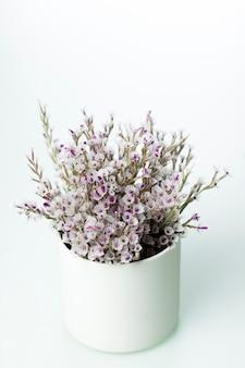 Fleurs séchées sur blanc