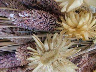 Fleurs séchées, fleurs