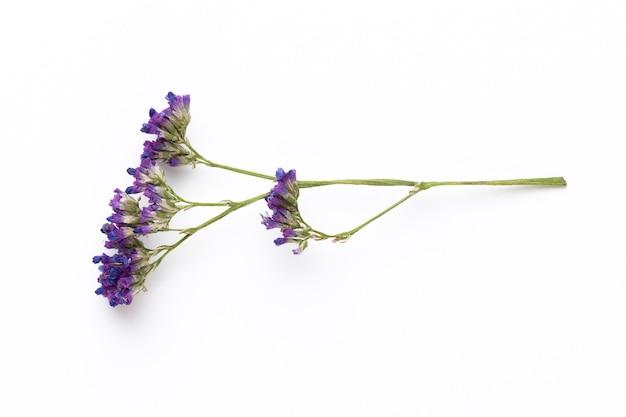 Fleurs séchées sur fond blanc. mise à plat, vue de dessus.