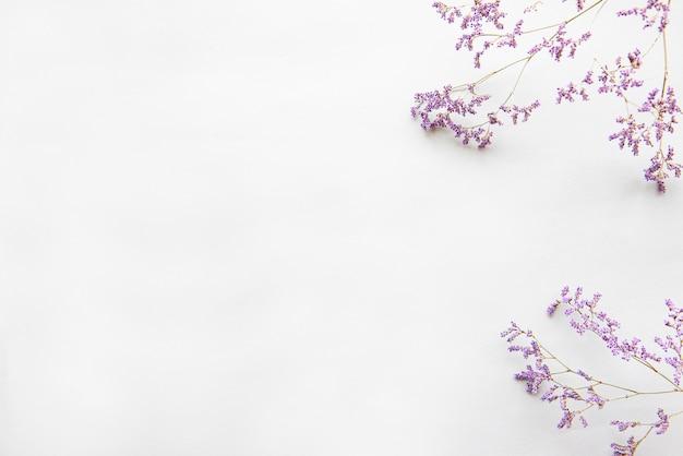 Fleurs séchées sur fond blanc