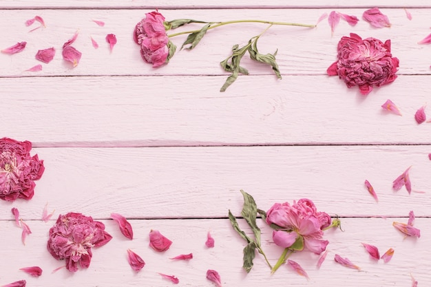 Fleurs séchées sur fond de bois rose