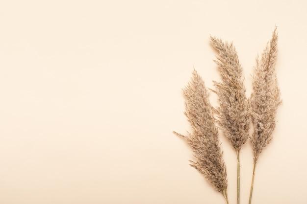 Fleurs séchées. fond de maquette de nature. composition à plat d'automne.