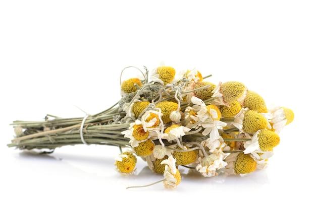 Fleurs séchées de marguerites médicales isolés sur fond blanc