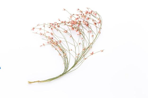 Fleurs séchées sur une surface blanche. mise à plat, vue de dessus.