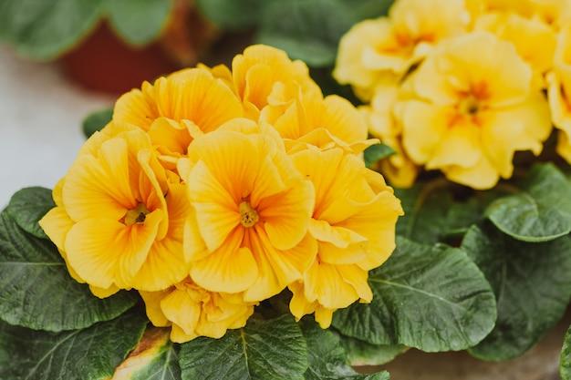 Fleurs en serre