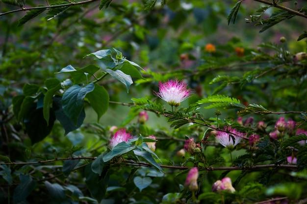 Fleurs de soie persan