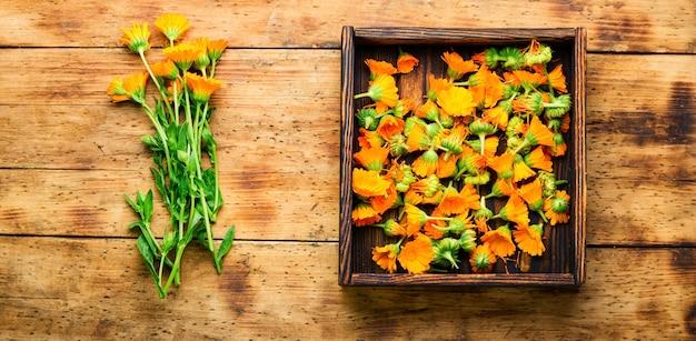 Fleurs de souci ou calendula, mise à plat