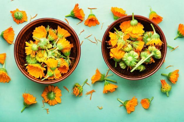 Fleurs de souci ou calendula, vue de dessus