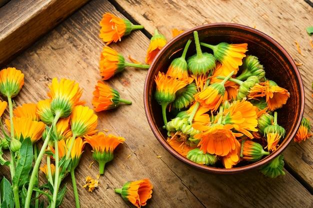 Fleurs de souci ou calendula