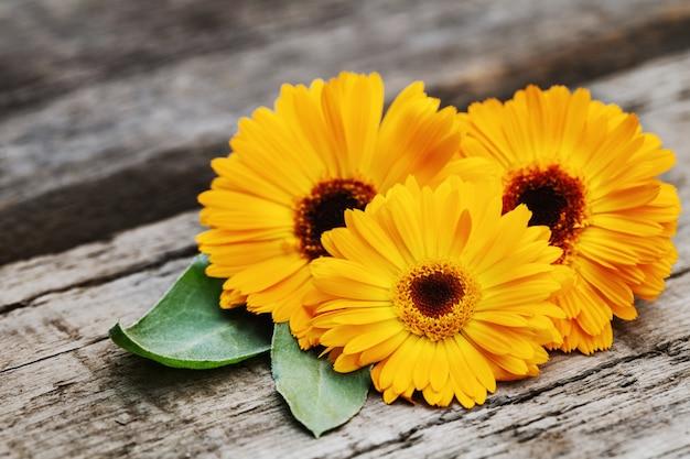 Fleurs de souci orange sur fond en bois