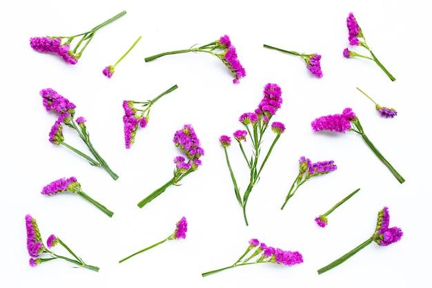 Fleurs statiques sur fond blanc.
