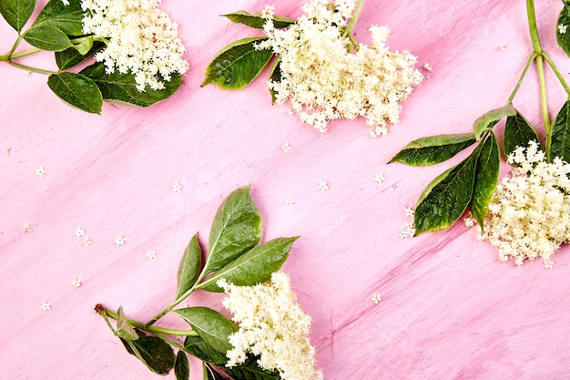 Fleurs de sureau blanches avec des feuilles