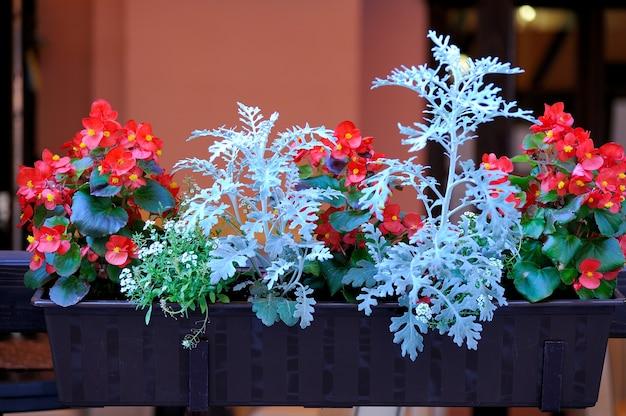 Fleurs suspendues à l'entrée du restaurant