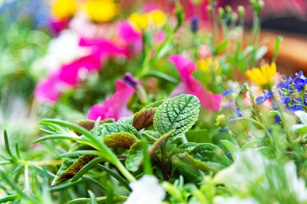 Fleurs sur la terrasse du restaurant