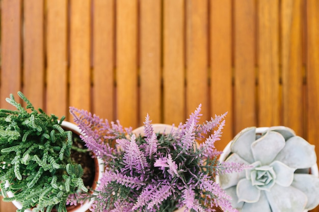 Fleurs en terrasse