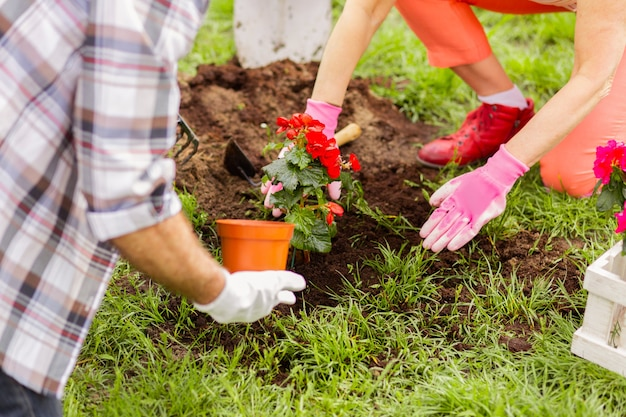Fleurs et terre. mari et femme plantant des fleurs après avoir enrichi le sol tout en profitant de l'été