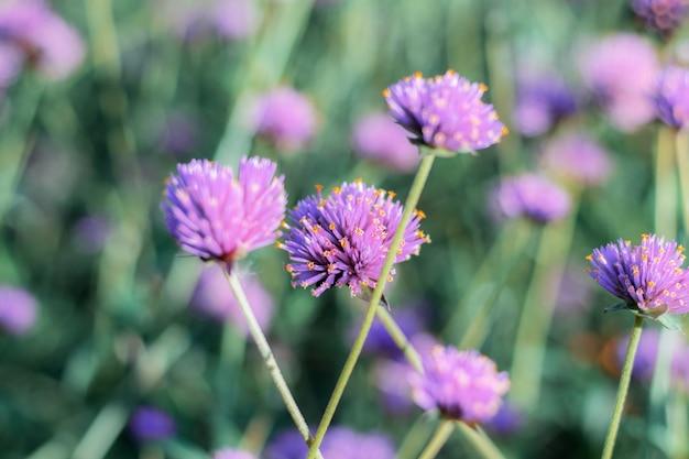 Les fleurs de la tête poussent avec de belles en hiver.