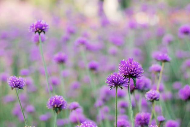Les fleurs de la tête poussent avec de belles plantations.