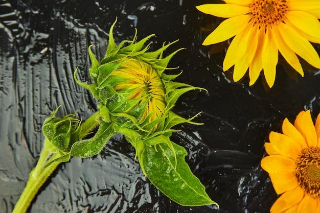 Fleurs de tournesol, de feuilles et de graines. concept d'automne.