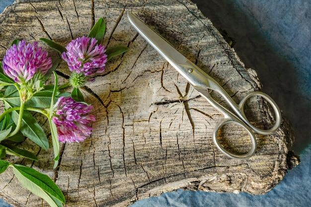 Fleurs de trèfle rose et ciseaux sur une vieille souche en bois