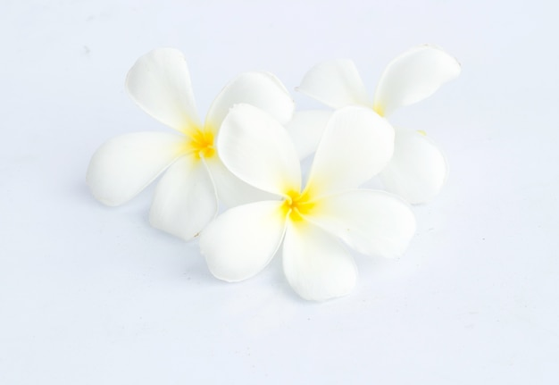 Fleurs tropicales frangipanier (plumeria) isolé sur blanc backgro