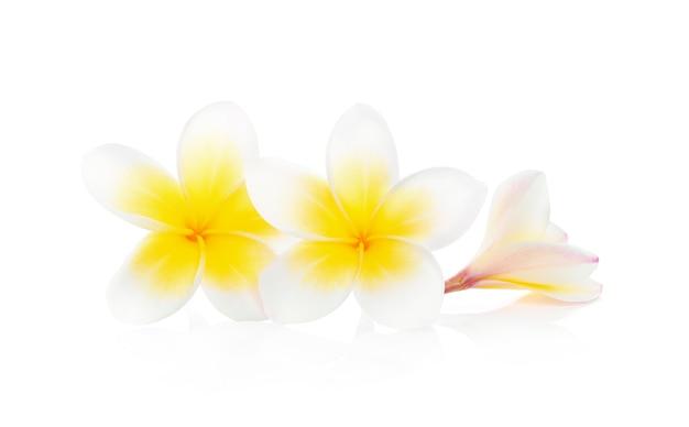 Fleurs tropicales frangipanier (plumeria) isolé sur fond blanc