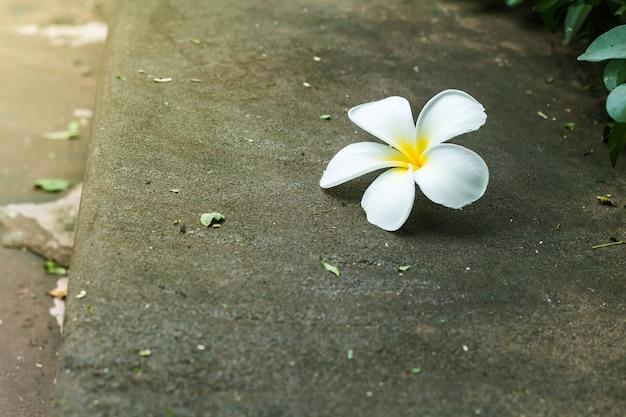 Fleurs tropicales plumeria sur bois - concept plumeria ou arôme unique plumeria