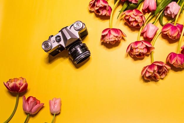 Fleurs de tulipe et appareil photo