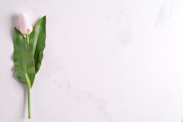 Fleurs de tulipe rose solitaire sur fond de pierre, à plat avec copie espace