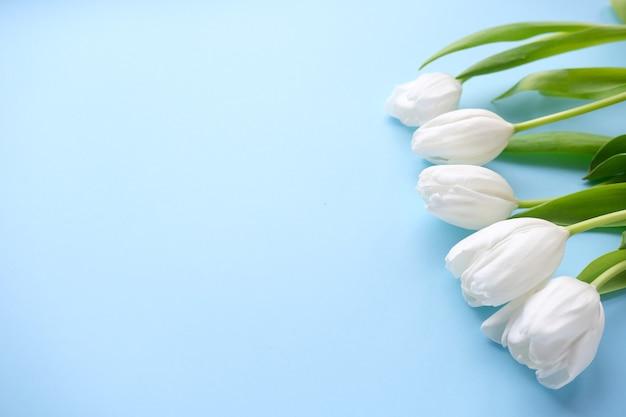 Fleurs tulipes blanches sur fond bleu