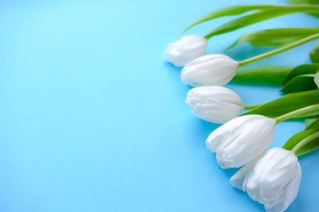Fleurs de tulipes blanches sur fond bleu