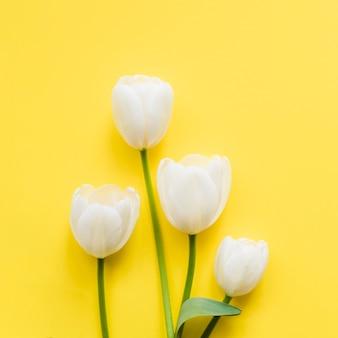 Fleurs de tulipes décoratives sur un fond coloré