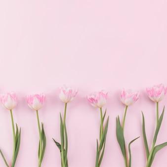 Fleurs de tulipes dispersées sur une table rose