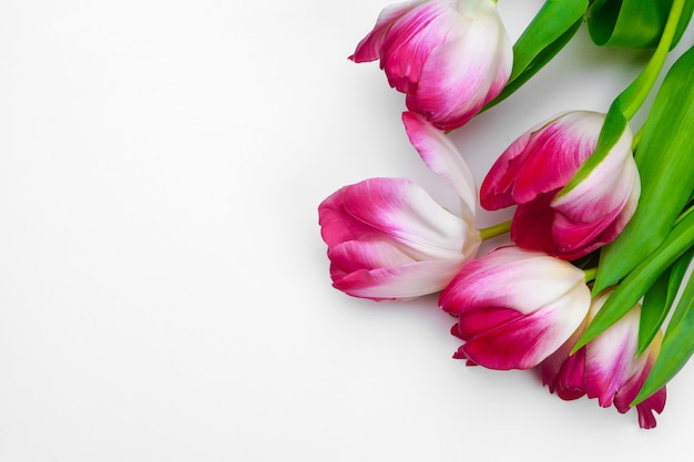 Fleurs de tulipes fraîches isolés sur fond blanc