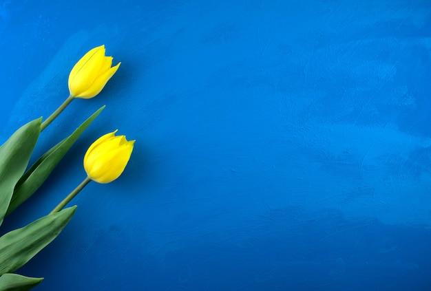 Fleurs de tulipes jaunes à plat sur fond de texture abstraite grunge océan bleu vif à la main