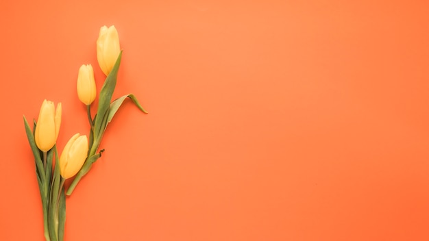 Fleurs de tulipes jaunes sur table orange