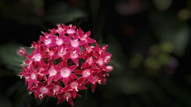 Fleurs de type apocynaceae pourpres