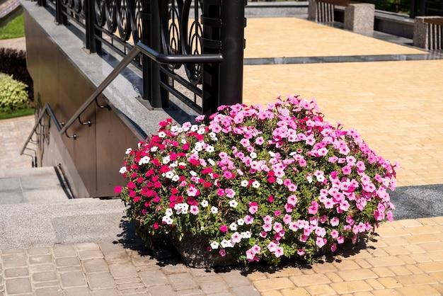 Fleurs urbaines dans le parterre de fleurs dans l'aménagement paysager des parcs et des places dans les dalles de pavage urbain