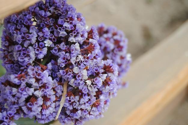 Fleurs violettes avec une clôture en bois floue en arrière-plan