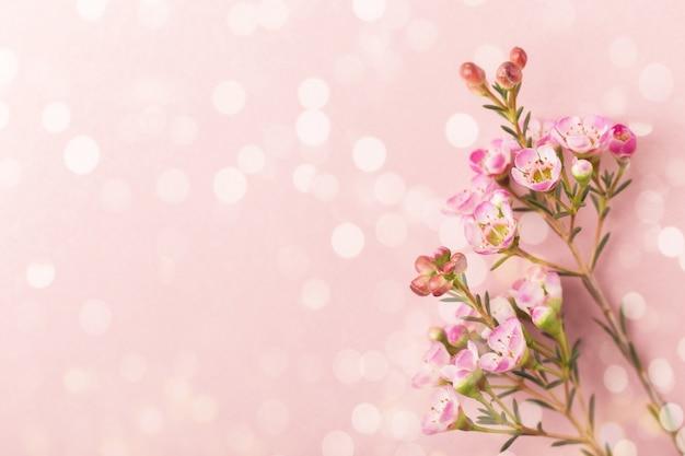 Fleurs violettes sur fond de bokeh